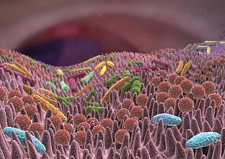 Darmflora wichtig bei Krebsbekämpfung