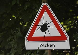 Zecken, Winter