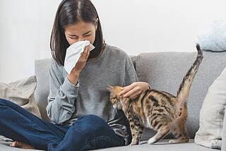 Eine neue Behandlung gegen Katzenhaarallergie scheint erfolgsversprechend zu sein