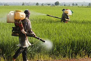 Gefährliche Pestizide: Neonicotinoide beeinflussen menschliche Nervenzellen
