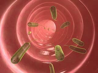 Bakterien im Fettgewebe erhöhen Entzündungswerte, haben Ärzte jetzt herausgefunden