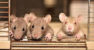 Weniger Tierleid durch bessere biomedizinische Forschung: Das BIH Quest-Center arbeitet zusammen mit Charité3R an diesem ambitionierten Ziel