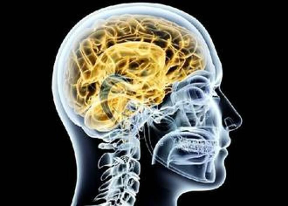Mit Koffein gegen Alzheimer Plaques