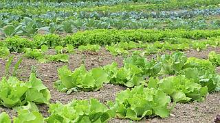 Böden und Grundwasser sind mit Nitrat belastet