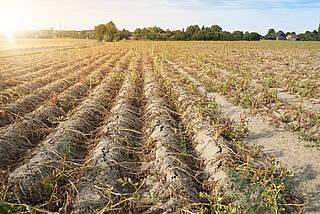 Klimwandel, Hitzewelle, Hitzeperiode, Dürre