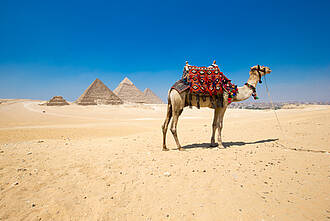 In Ägypten haben sich in diesem Jahr schon mehr als 30 Deutsche mit EHEC infiziert.