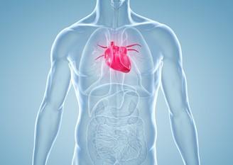 Symptome der Myokarditits
