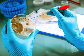 Multiresistente Keime sind großes Problem im Gesundheitswesen