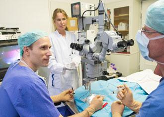 Forscher entwickeln Stammzelltherapie gegen Makuladegeneration